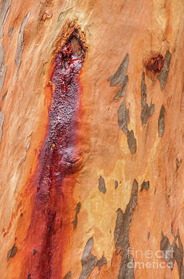 Photograph - Bark Kc05 by Werner Padarin