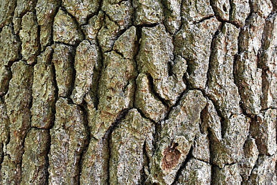 Photograph - Bark by Lydia Holly
