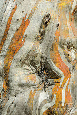 Photograph - Bark Mf1 by Werner Padarin