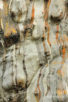 Photograph - Bark Mf2 by Werner Padarin