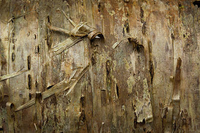 Photograph - Bark by Mike Eingle