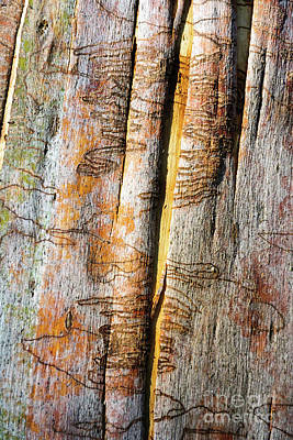 Photograph - Bark Mk1 by Werner Padarin