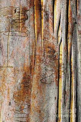 Photograph - Bark Mk2 by Werner Padarin
