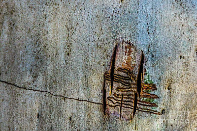 Photograph - Bark Mk3 by Werner Padarin
