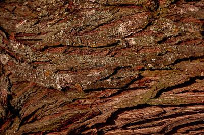 Photograph - Bark N #g9 by Leif Sohlman