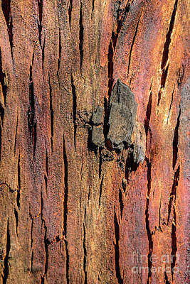 Photograph - Bark Nnp01 by Werner Padarin