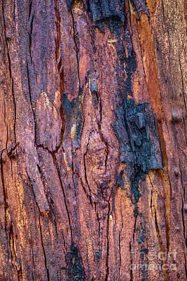 Photograph - Bark Nnp02 by Werner Padarin