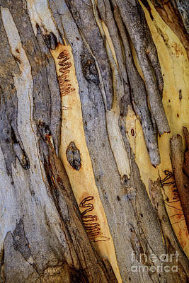 Photograph - Bark Nnp03 by Werner Padarin