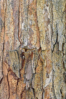 Photograph - Bark No. 56-1 by Sandy Taylor