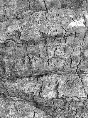 Photograph - Bark No. 64a-1 by Sandy Taylor