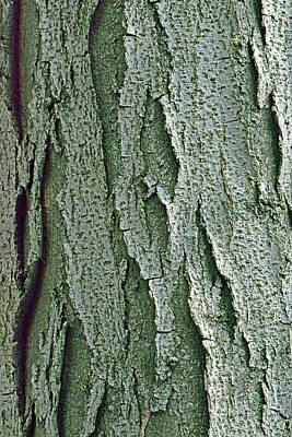 Photograph - Bark No. 9-1 by Sandy Taylor