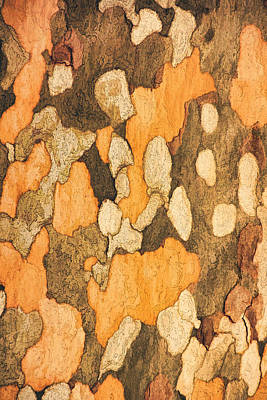 Photograph - Bark Of A Sycamore Text by Theo O'Connor
