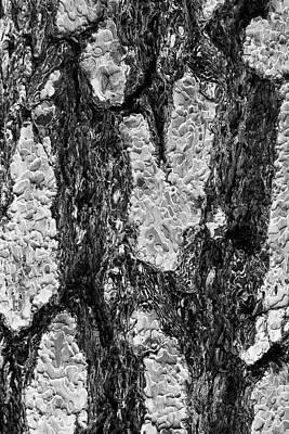 Pine Cone Photograph - Bark Or I Will by Scott Campbell