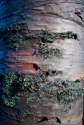 Photograph - Bark by Rikk Flohr
