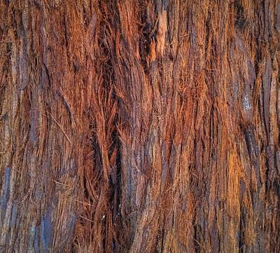 Photograph - Shaggy Bark by Sandy Taylor