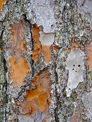 Photograph - Bark Spirit 3 by Lynda Lehmann