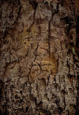 Photograph - Bark Spirit by Murray Bloom