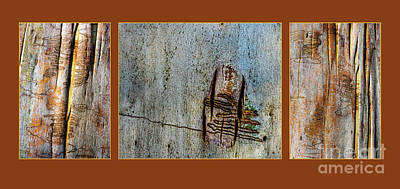 Photograph - Bark Triptych Mk4 by Werner Padarin