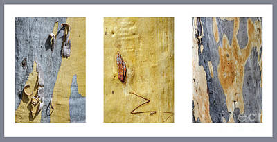 Photograph - Bark Triptych Gd1 by Werner Padarin