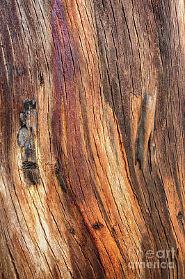 Photograph - Bark Yt1 by Werner Padarin