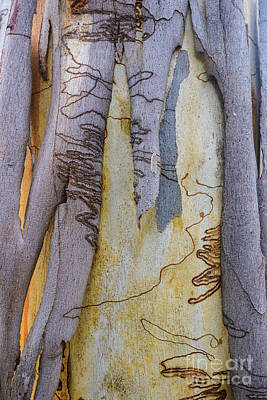 Photograph - Bark Yt2 by Werner Padarin