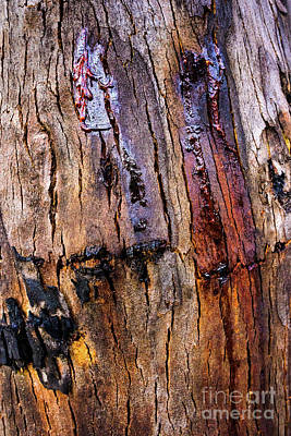 Photograph - Bark Yt3 by Werner Padarin