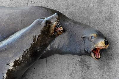 Photograph - Barking Lions - Sea Lions by KJ Swan
