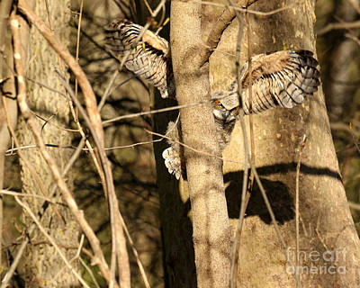 Photograph - Barking Up The Wrong Tree by Heather King