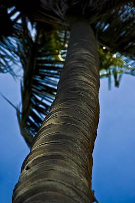 Photograph - Barking Up The Wrong Tree by Sarita Rampersad