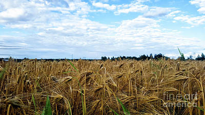 Photograph - Barley And Sky In Oulu, Finland. by Cesar Padilla