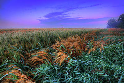 Photograph - Barley by Dan Jurak