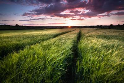 Canterbury Wall Art - Photograph - Barley Fields At Sunset by Ian Hufton