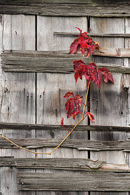 Photograph - Barn Adornment by Michael Blanchette
