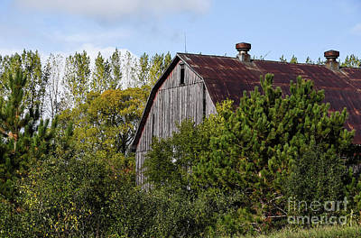 Photograph - Barn Amongst The Trees by Grace Grogan