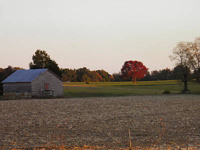 Photograph - Barn And Red Tree by Nick Kirby