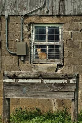 Photograph - Barn Cat by Deb Buchanan