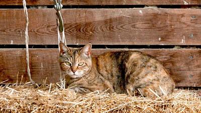 Animal Shelter Photograph - Barn Cat by Jason Freedman