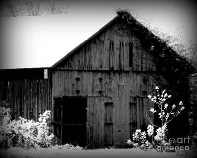 Fleetwood Mac - Barn Door by Linda Galok