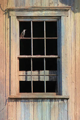 Photograph - Barn Dweller by Lori Deiter