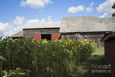 Photograph - Barn Gazing by Tara Lynn