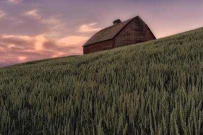 Photograph - Barn In A Field Of Grain Palouse Wa Dsc04641 by Greg Kluempers
