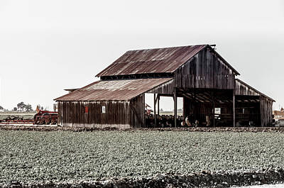 Photograph - Barn In Cotton Field by Gene Parks