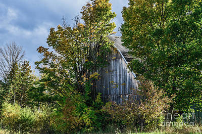 Photograph - Barn In Hiding by Grace Grogan