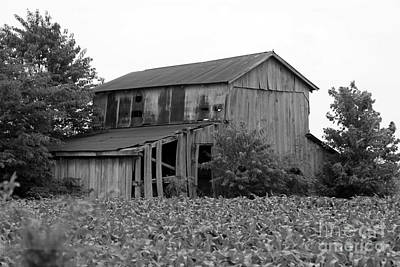 Anchor Down Royalty Free Images - Barn in Illinois no 3 Royalty-Free Image by Dwight Cook