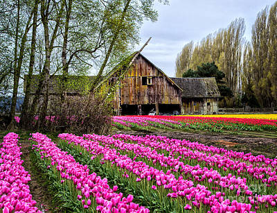 Photograph - Barn In Pink by Sonya Lang