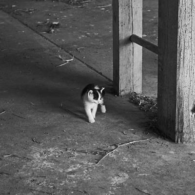 Photograph - Barn Kitten by Wilma  Birdwell