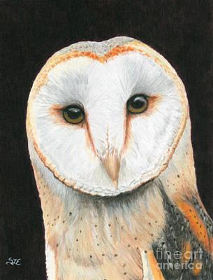 Drawing - Barn Owl 2 by Sheryl Elen