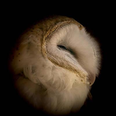 Photograph - Barn Owl 6 by Ernie Echols