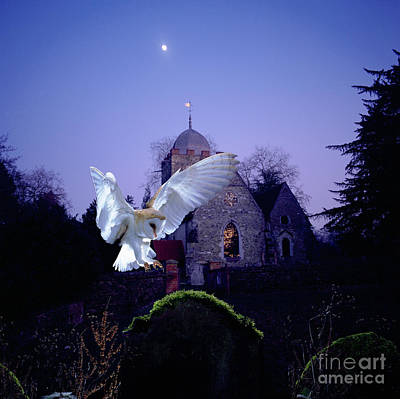 Photograph - Barn Owl Alighting At Albury Church by Warren Photographic