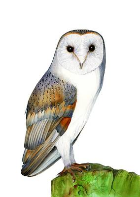 Painting - Barn Owl by Alison Langridge